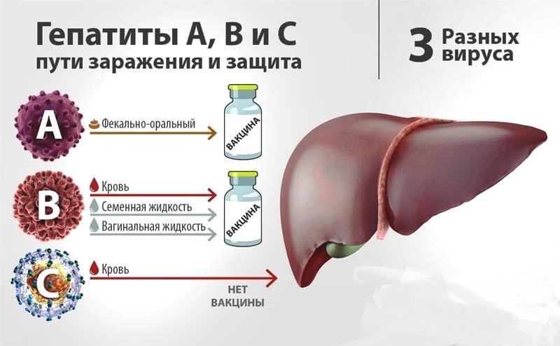 Какие пути заражения гепатитом А существуют?