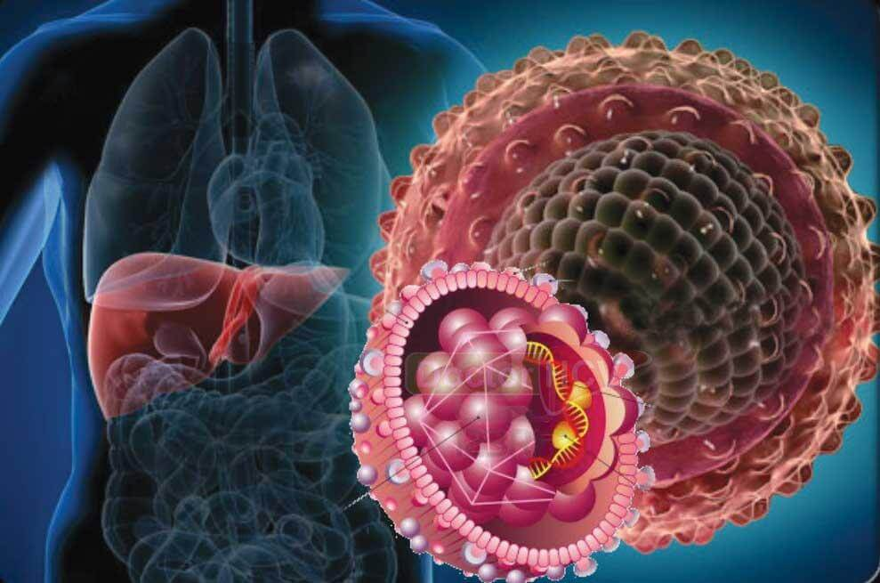 За какое время выявляется гепатит с thumbnail